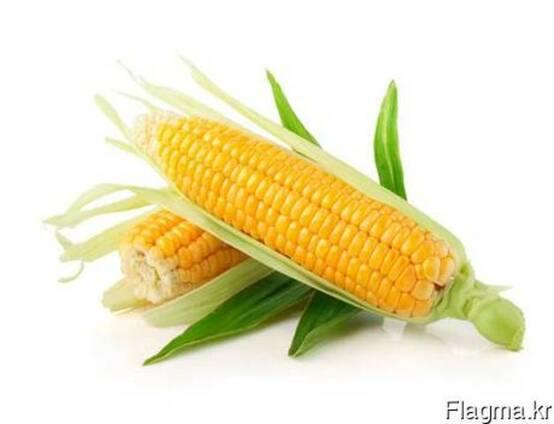 Greenfield Incorporation sells Yellow Corn /wholesale/
