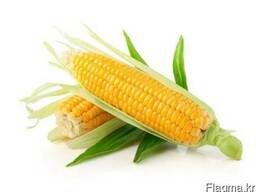 Greenfield Incorporation sells Yellow Corn /wholesale/ - photo 1