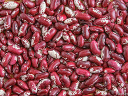 Quality 3D beans from Kyrgyzstan