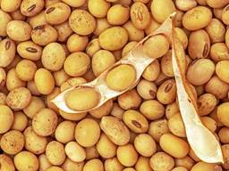 Soybean Grain Non - Gmo For Export