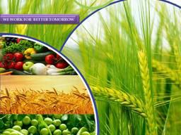 전세계 살충제 제조업체 및 공급 업체